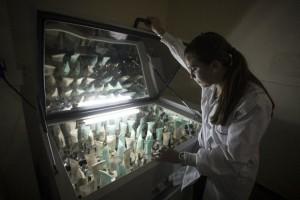 Cepa-de--superbacteria--se-extiende-a-nivel-global