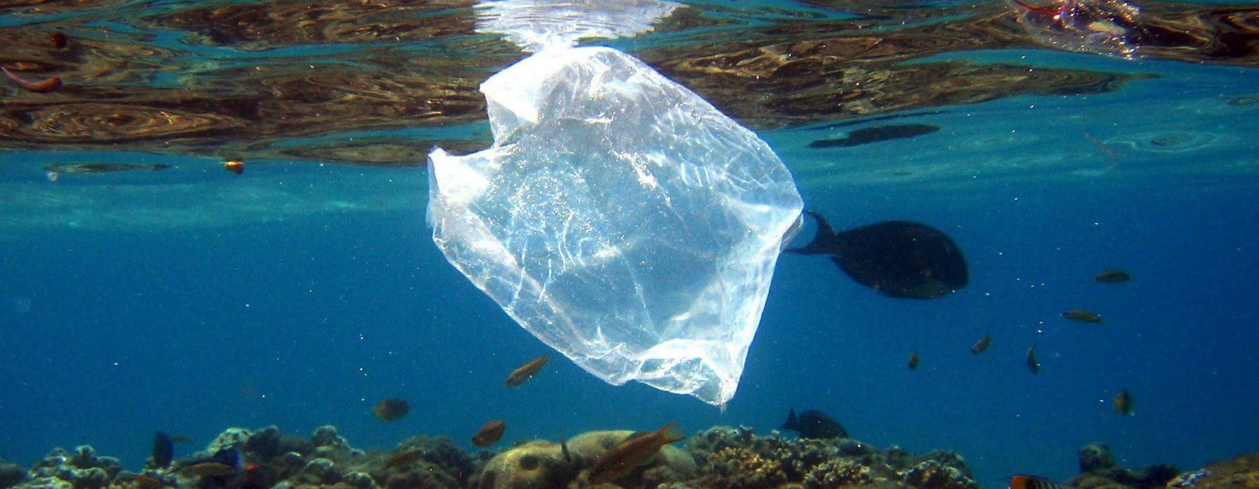 en 2050 habr m s pl stico que peces en los mares astrolabio