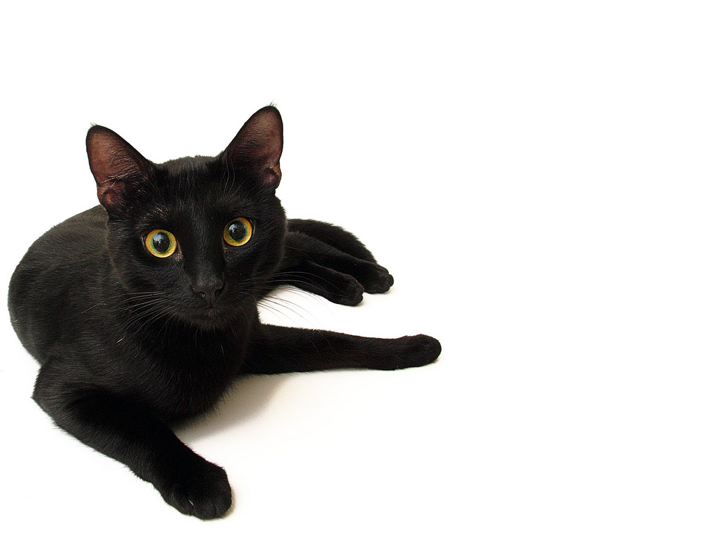 black-cat-house