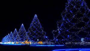 japan-christmas-trees