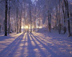 winter-photo